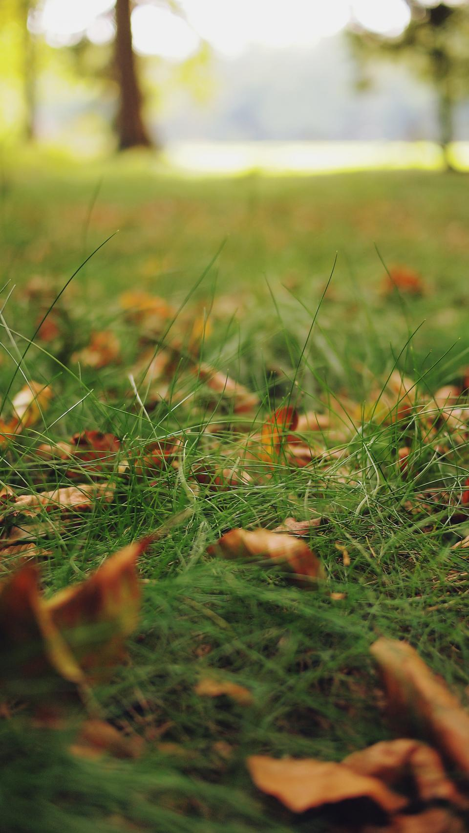 grass, leaves