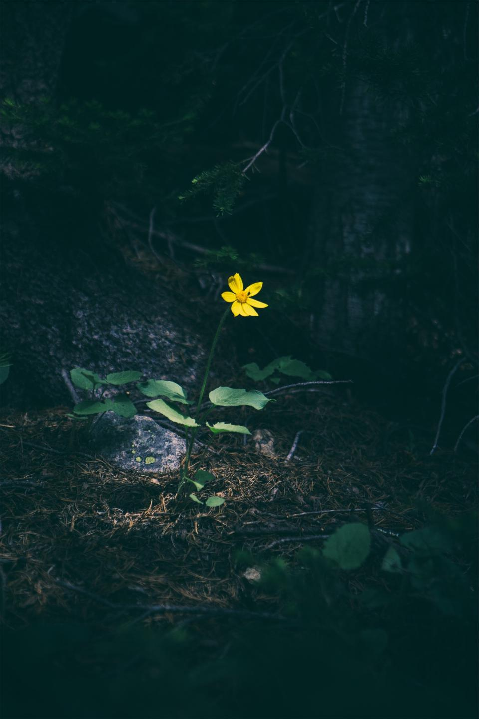 yellow, flower, forest, woods, nature