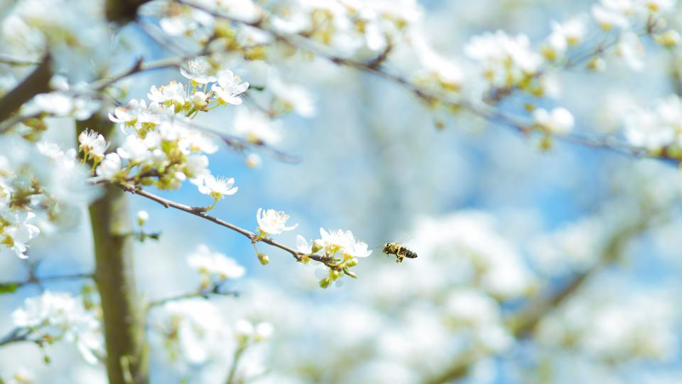 flowers, nature, blossoms, field, bed, white, stems, branches, petals, leaves, trees, sky, outdoors