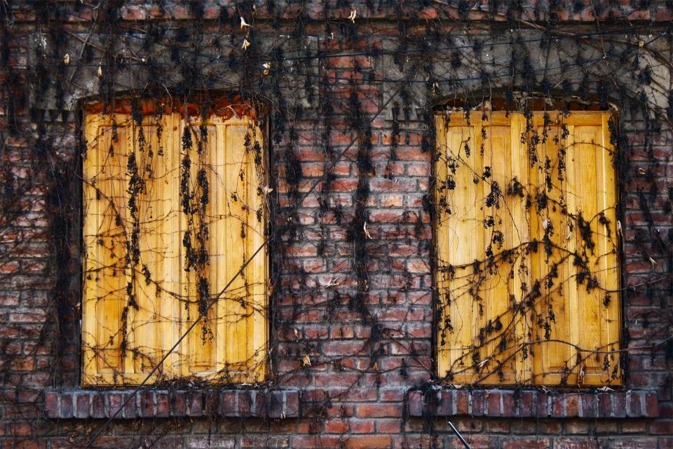 bricks, vines, wood, shutters