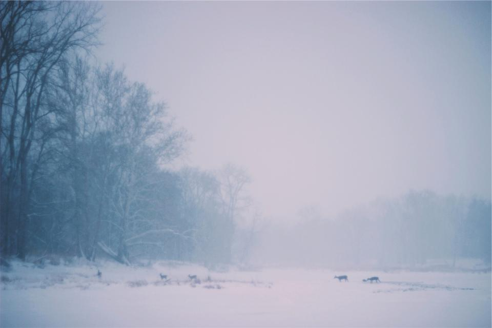 deer, animals, crossing, winter, snow, cold, blizzard, fog, forest, woods, trees, nature