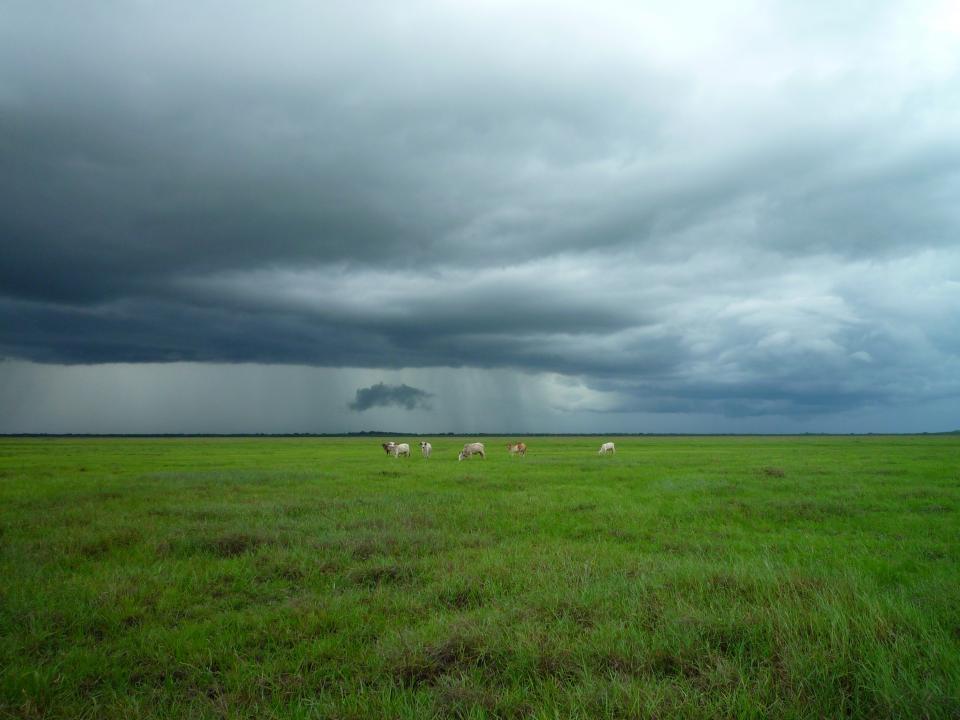 animals, farm, grass, fields, country, clouds, dark, storm, green