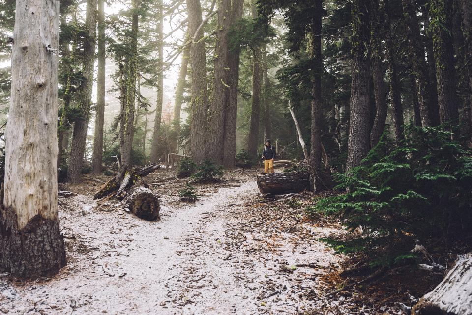 hiking, trek, trail, woods, forest, nature, trees, path, snow, cold, winter, man