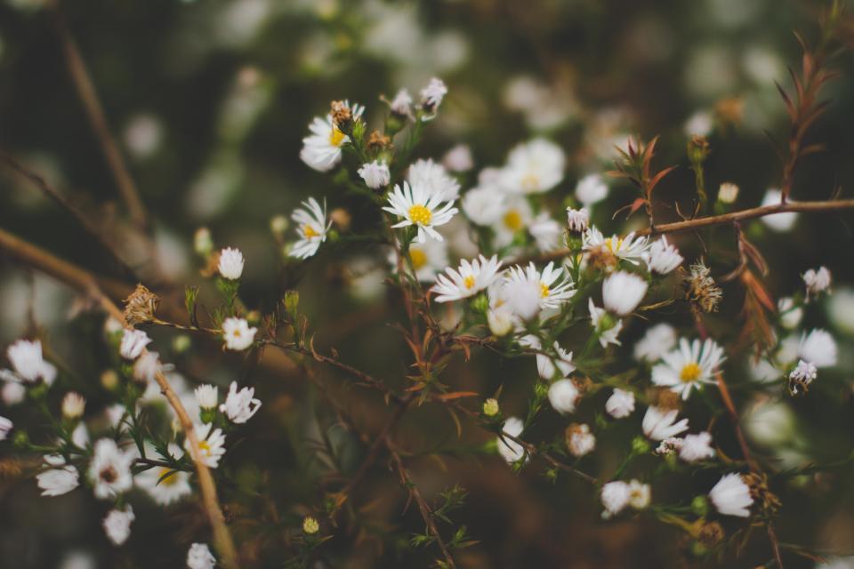 plants, flowers, garden, nature
