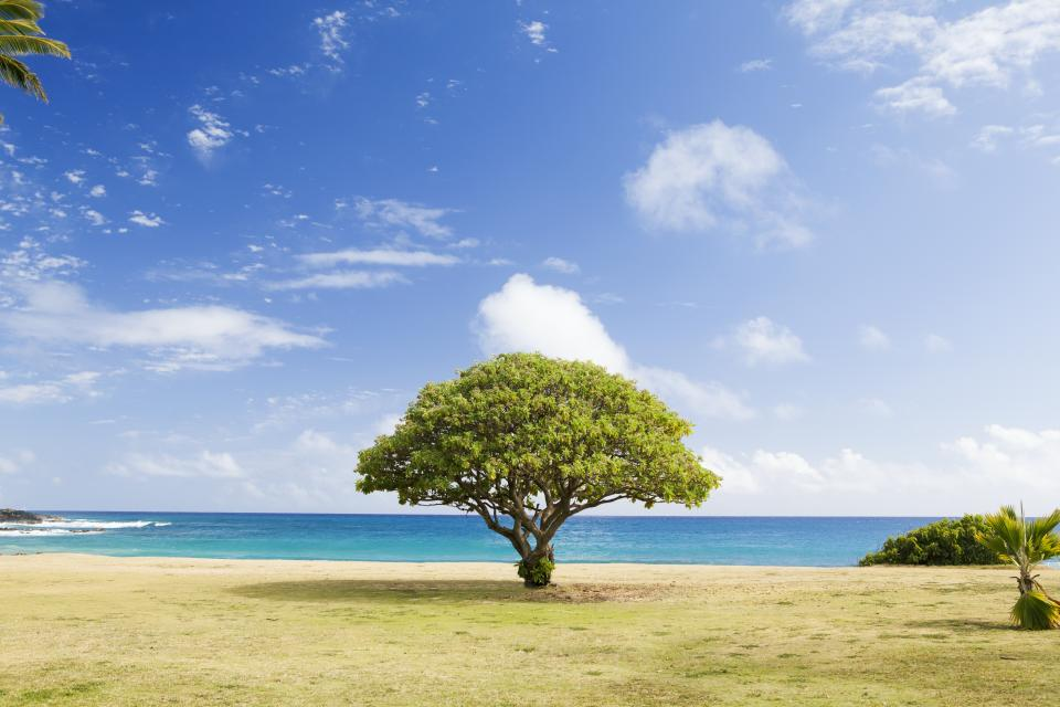 grass, trees, blue, sky, sunshine, summer, clouds, ocean, sea, water, vacation, travel