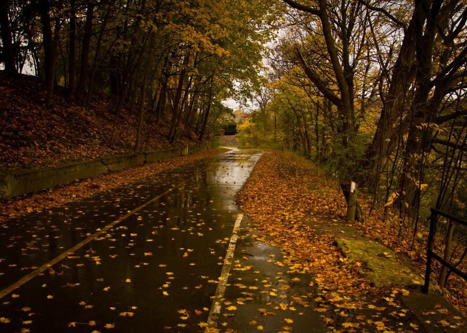 road, wet, rain, leaves, autumn, fall, trees, nature, rural