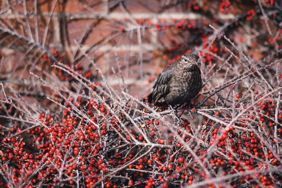 bird, branches, nature, animals