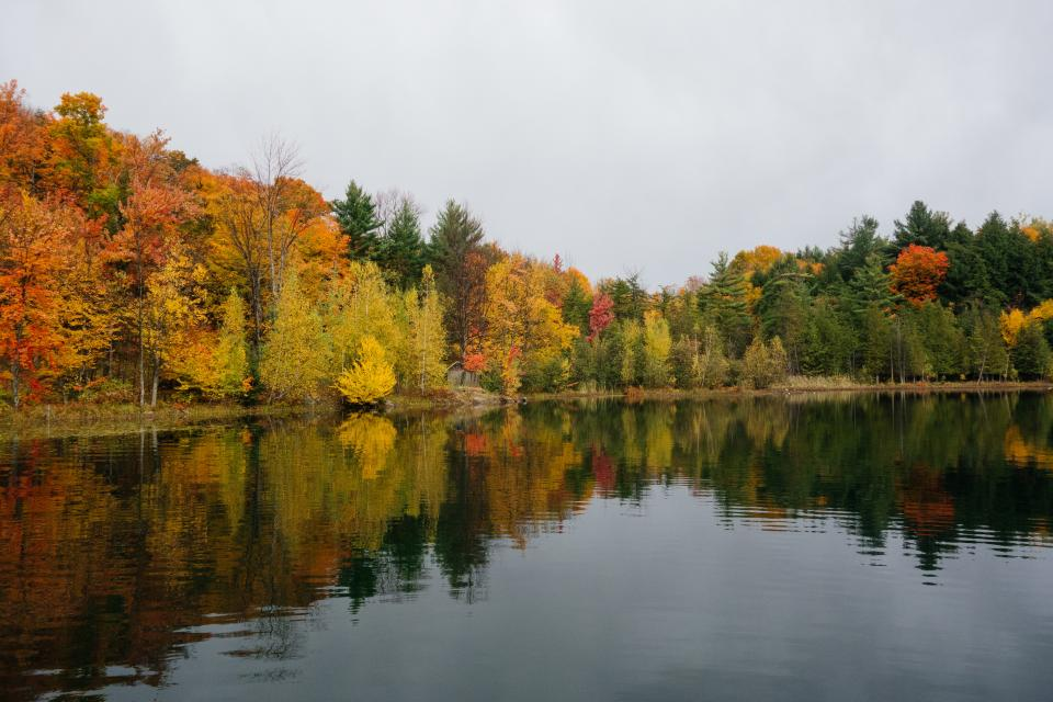 trees, autumn, fall, leaves, colors, lake, nature, outdoors, water