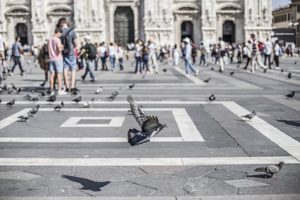 birds, pigeons, animals, people, crowd, tourists, concrete, city, urban