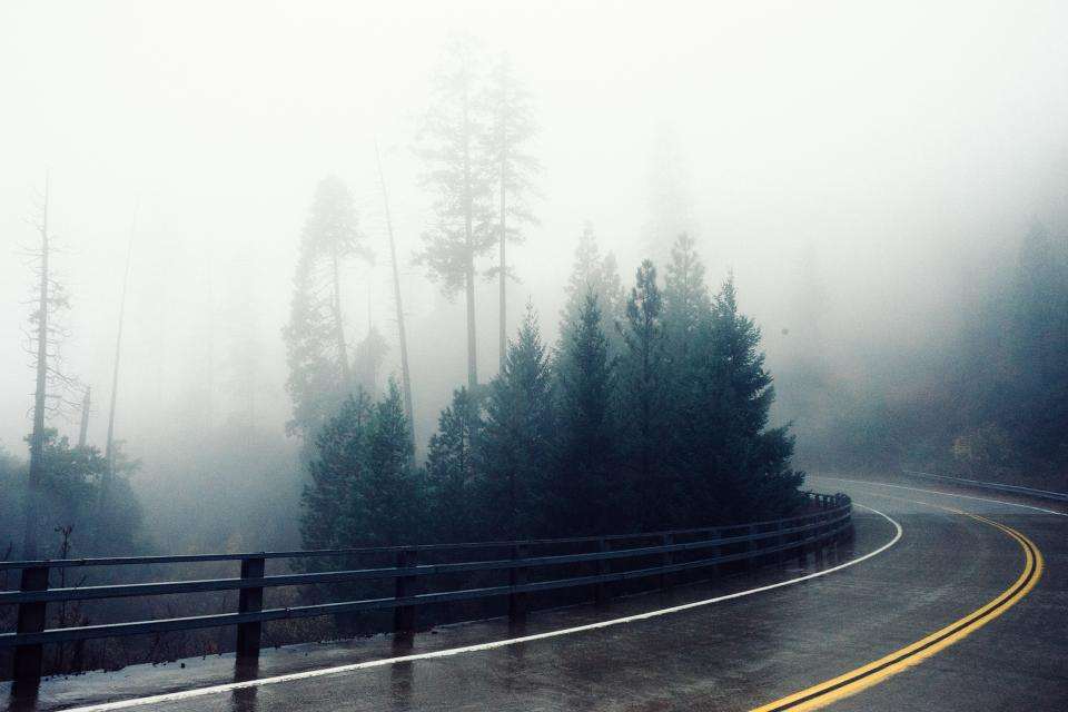 winding, road, railing, guard rail, fog, foggy, trees, forest, hill