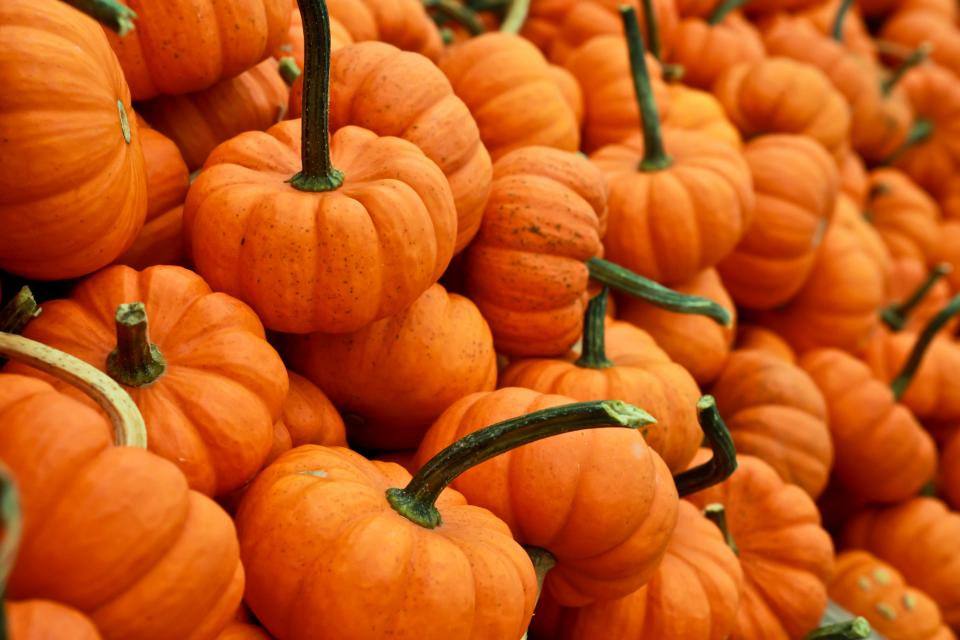 orange, pumpkins, halloween