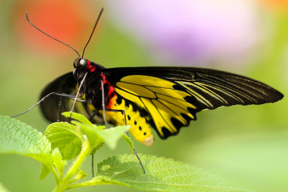 butterfly, insect, colorful, nature, green, leaves, plant, sunlight, sunny, summer, blur