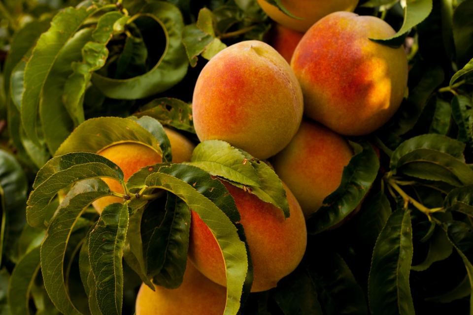 peaches, fruits, healthy, food, plants, trees, leaves, nature