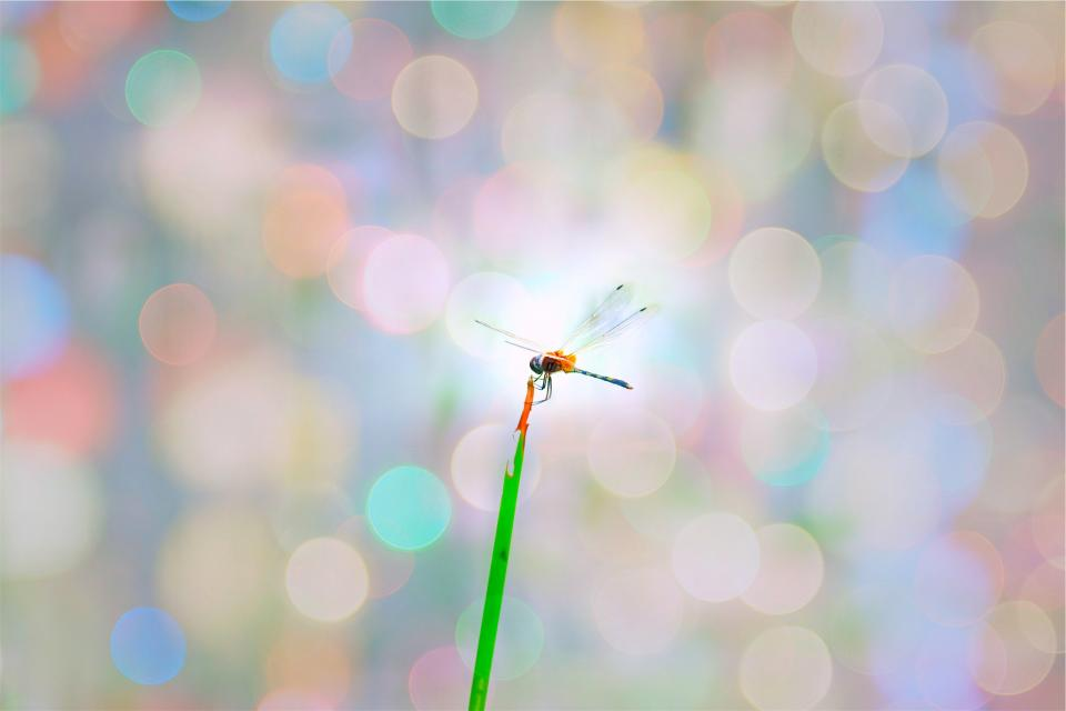 dragonfly, insect, plant, blurry