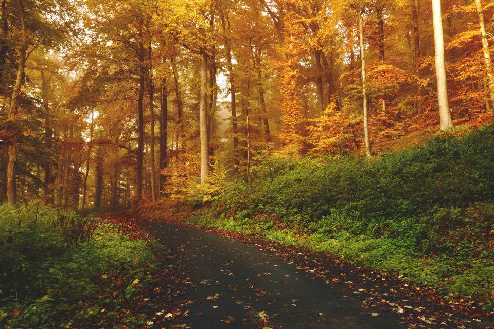 trail, path, forest, woods, trees, grass, nature, leaves, autumn, fall