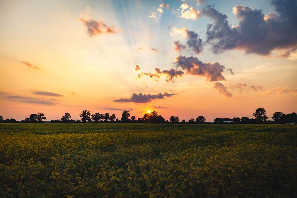 sunset, dusk, sky, clouds, grass, field, trees, nature, landscape, outdoors