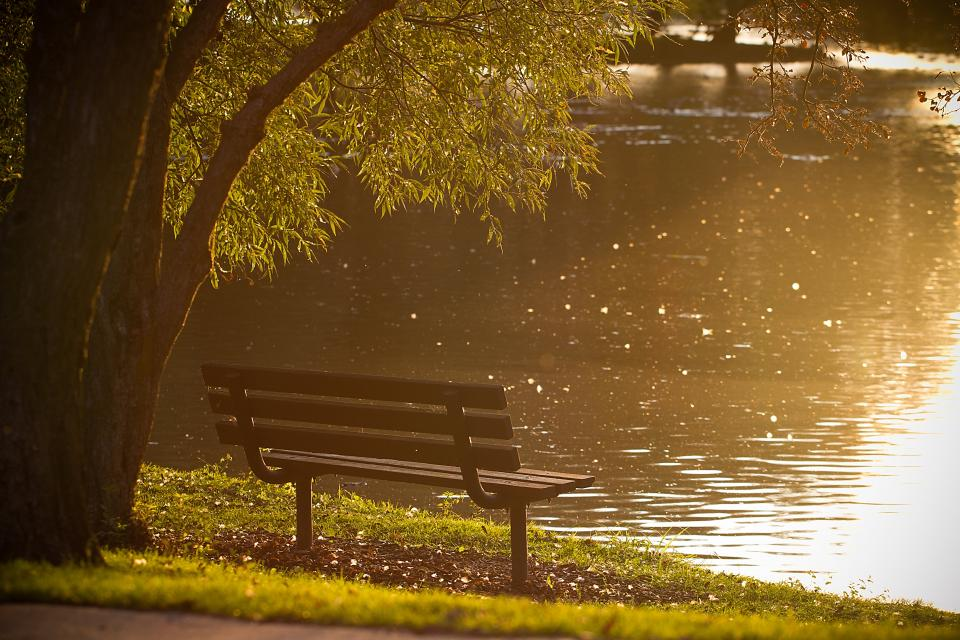 park, bench, river, water, trees, grass, nature, sun rays