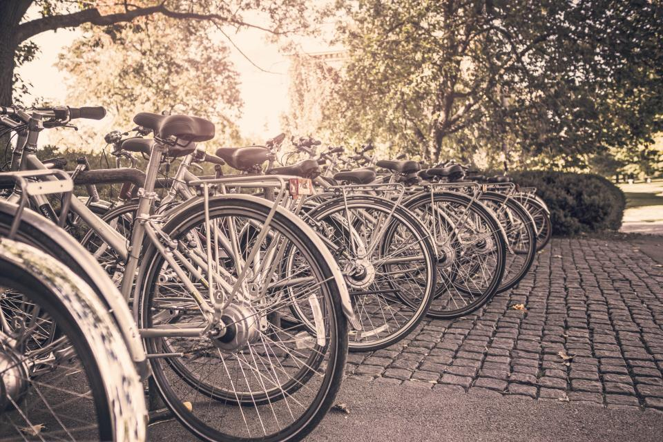 bikes, bicycles, racks, cobblestone, park, trees