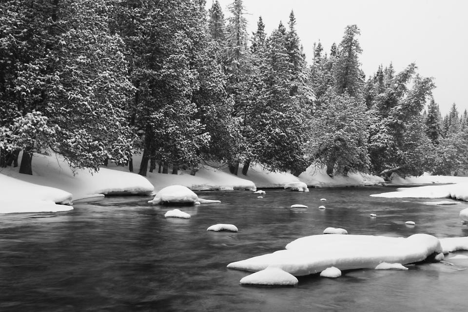 river, water, snow, cold, winter, trees, forest, woods, outdoors, nature, black and white