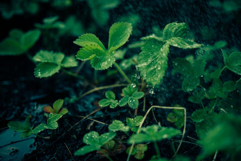 green, plants, leaves, nature, dew, rain, drops