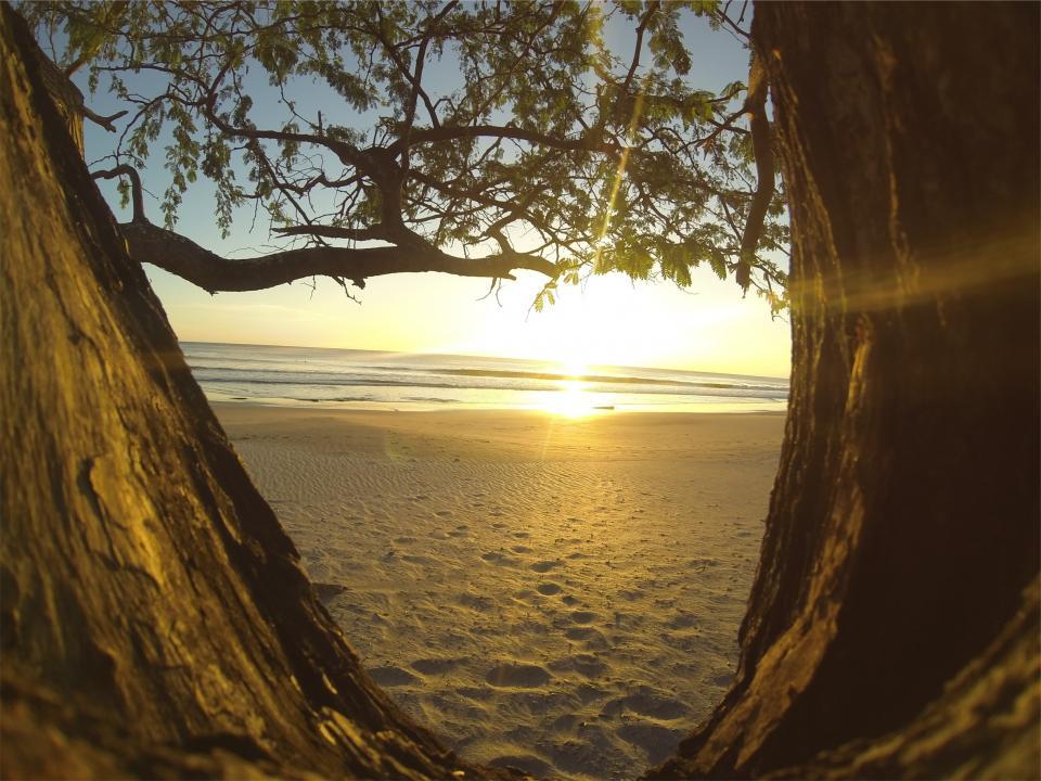 sunset, beach, sand, ocean, sea, tree trunk, trees