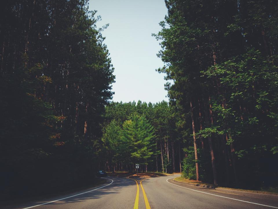 trees, forest, road, car, driving, rural