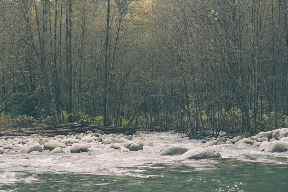 river, water, rocks, trees, forest, woods, nature, stream, branches