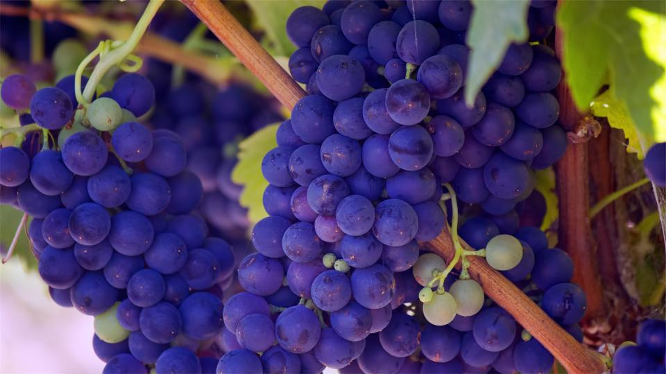 grapes, fruits, vines, purple, healthy, food