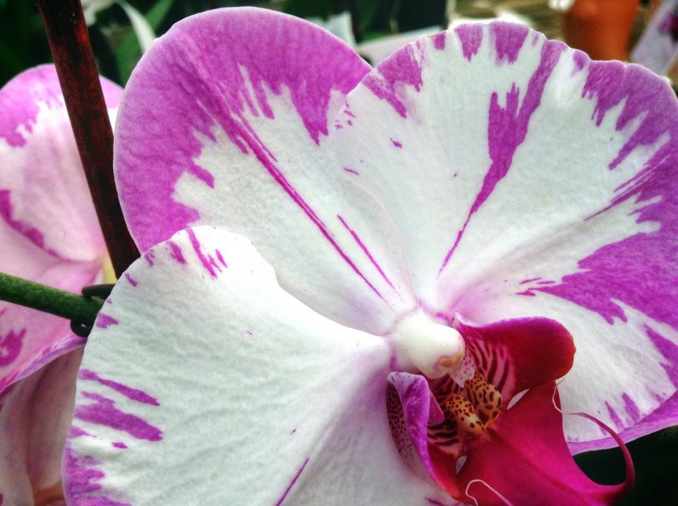 white, purple, flowers
