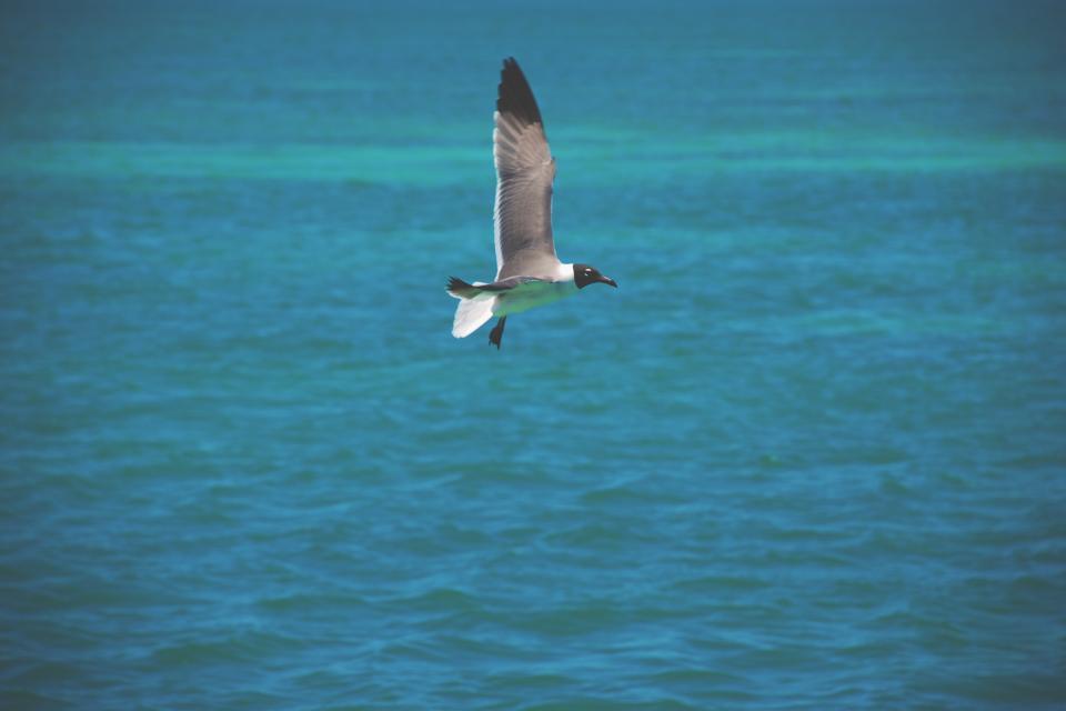 bird, flying, ocean, sea, water, tropical