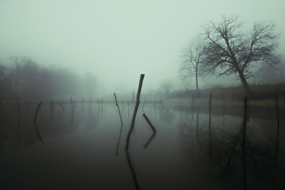 fog, foggy, nature, water, river, trees, outdoors, dark