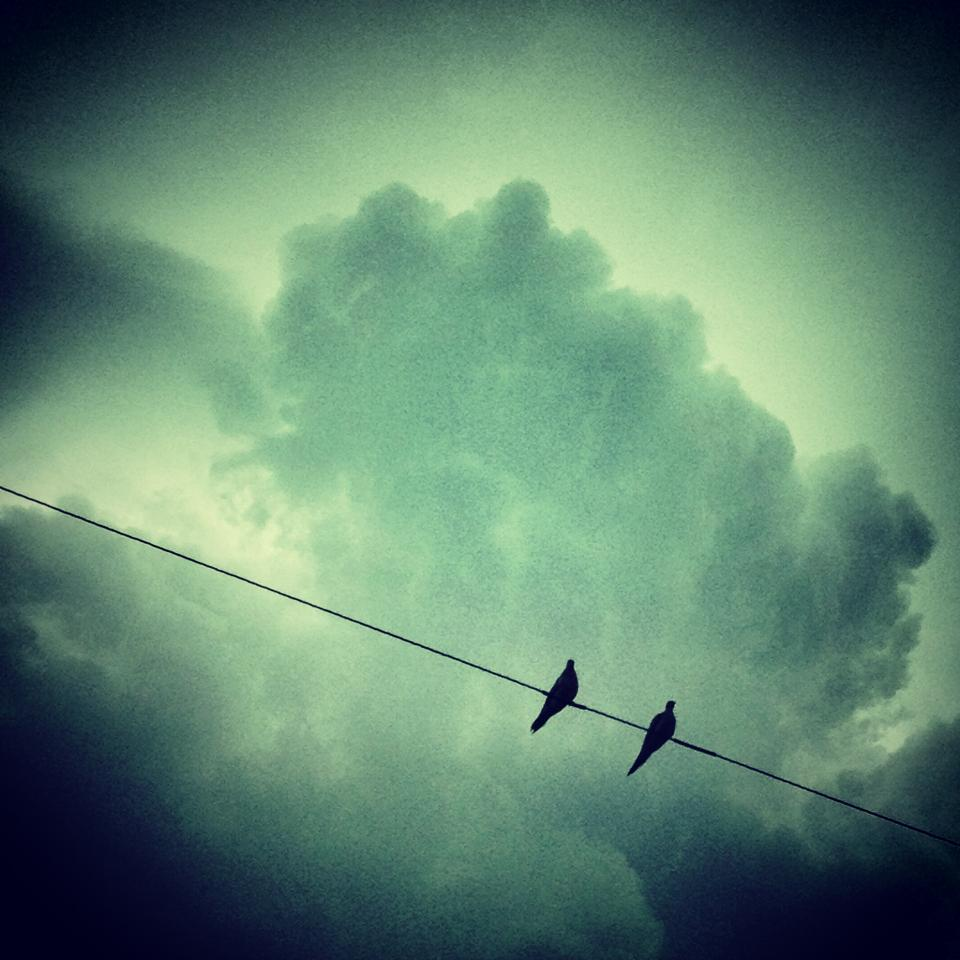 birds, animals, sky, clouds, green, silhouette, dark, power lines
