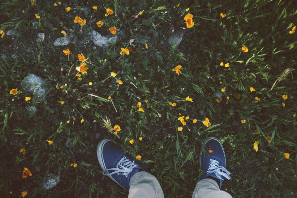 shoes, sneakers, grass, garden, nature, flowers, weeds