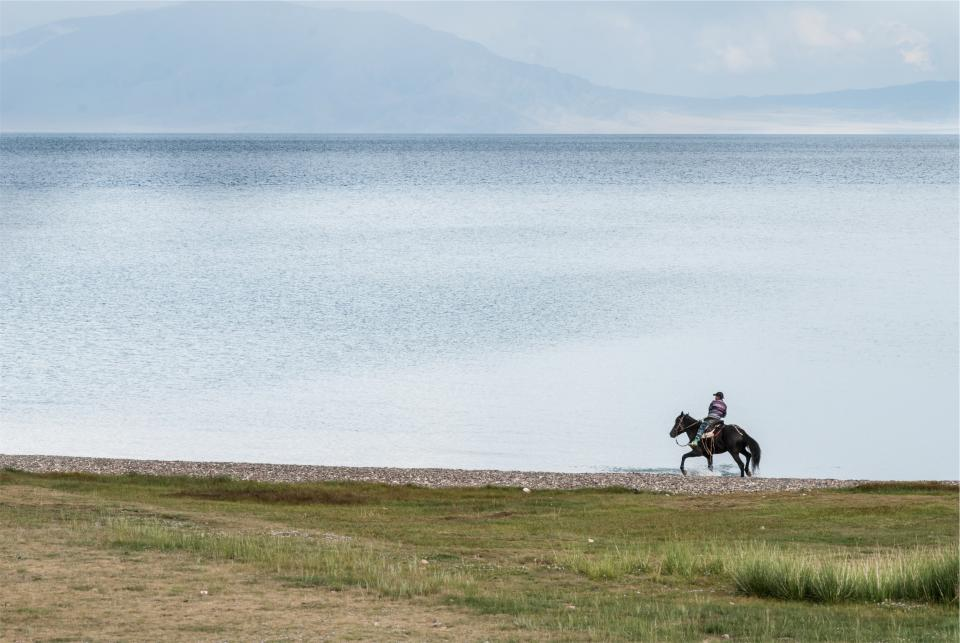 horseback riding, lake, water, man, guy, animal, grass