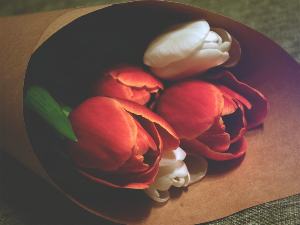 red, roses, flowers, white
