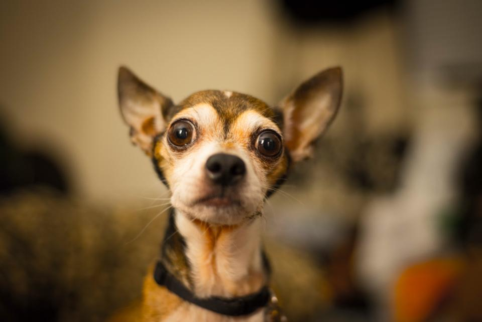 dog, animals, eyes