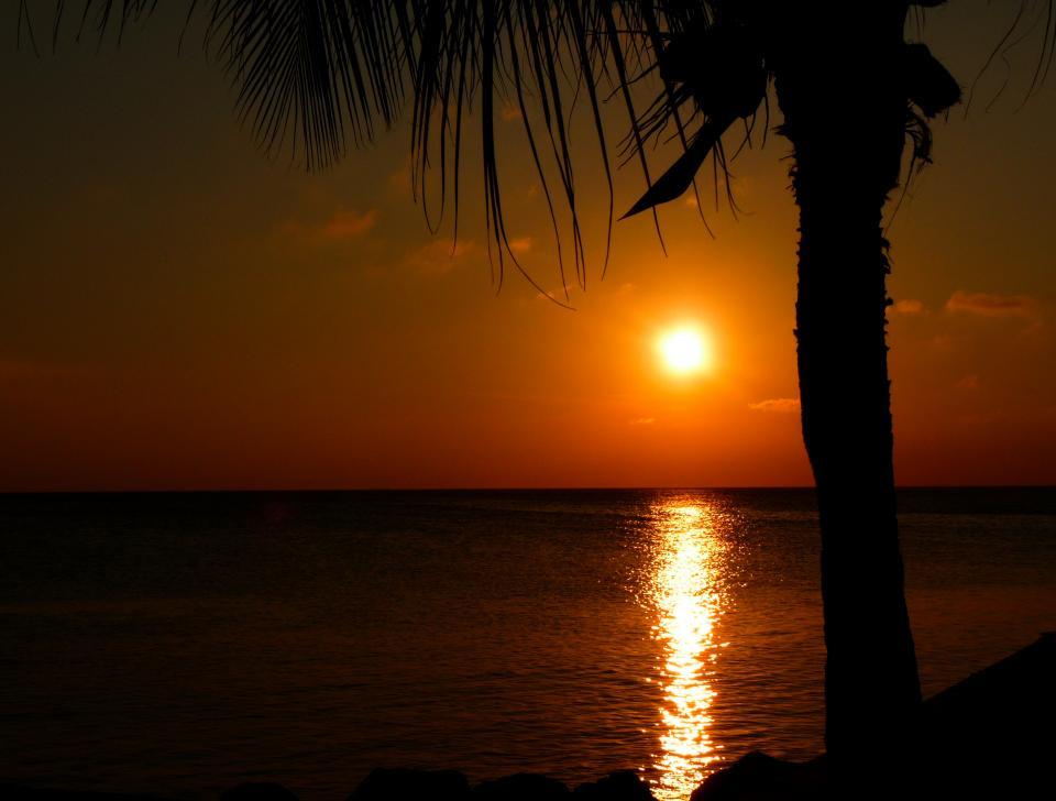 sunset, water, ocean, sea, palm trees, dusk, dark, night, caribbean