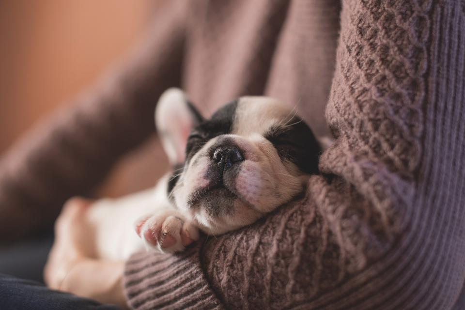 dog, sleeping, tired, puppy, animal, family, holding