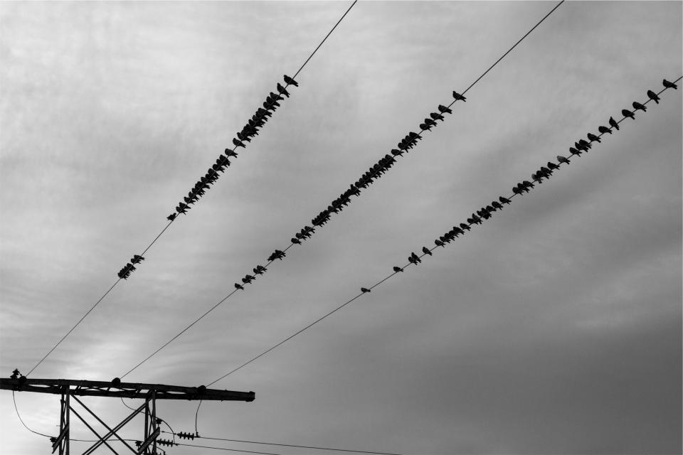 power lines, birds, sky, cloudy, grey, black and white, electricity, hydro