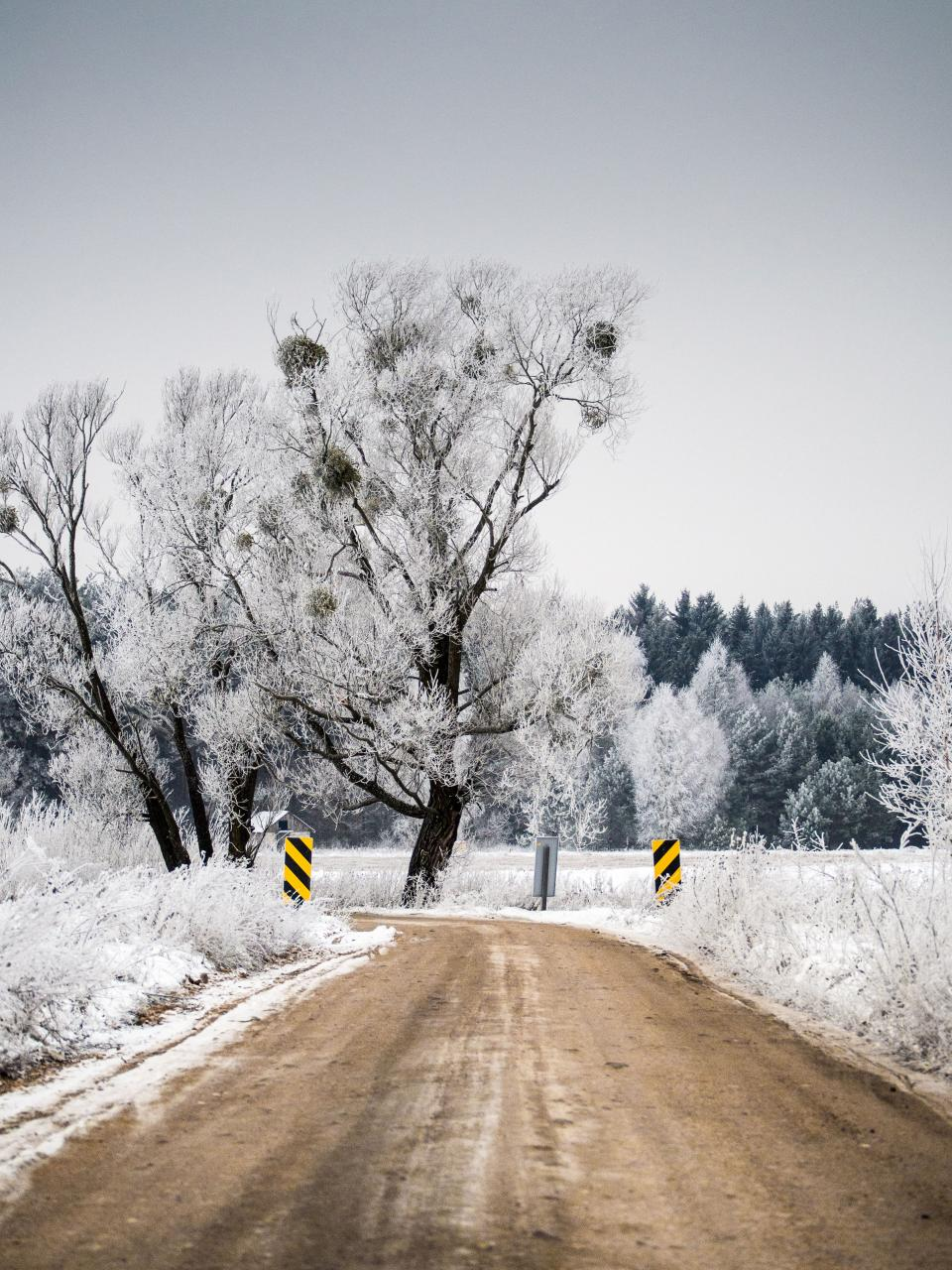 winter, dirt, road, snow, trees, forest, nature, outdoors, cold, ice, frozen