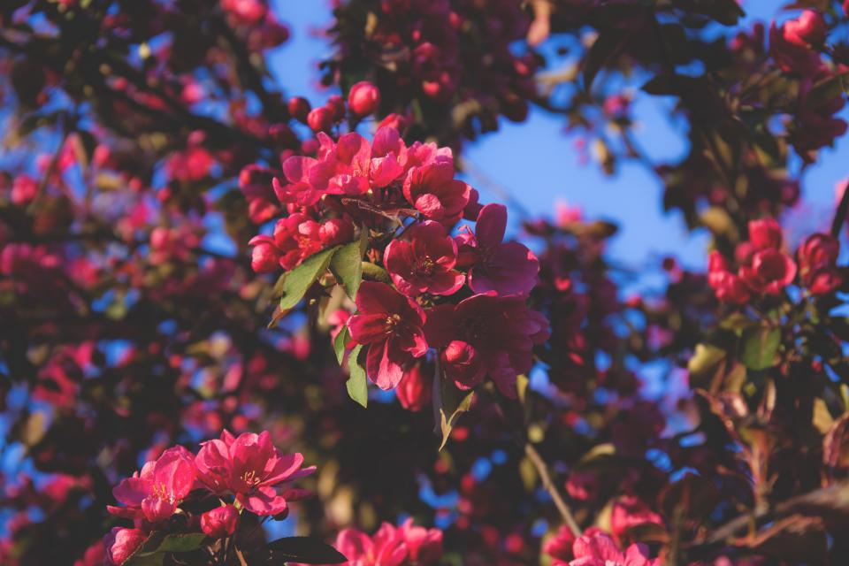 flowers, nature, blossoms, branches, leaves, clusters, pink, petals, trees, macro, outdoors, sky, still, bokeh