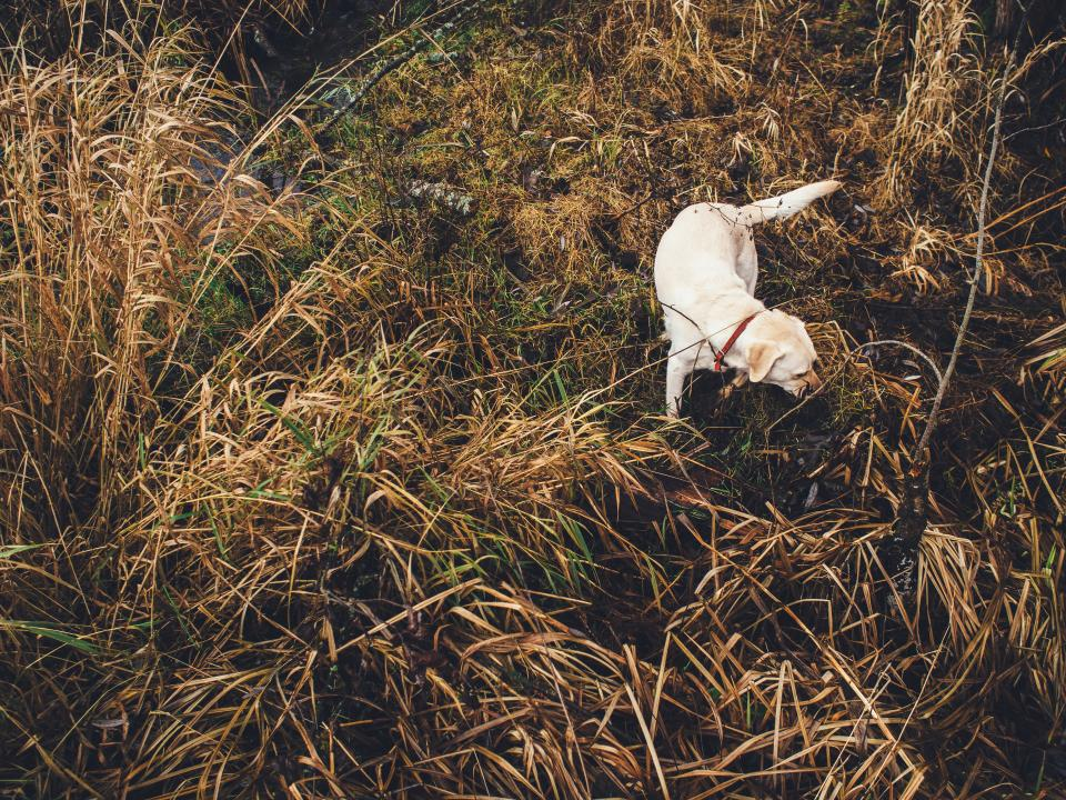 dog, pet, animals, grass, shrubs, bushes, plants, swamp, nature, outdoors