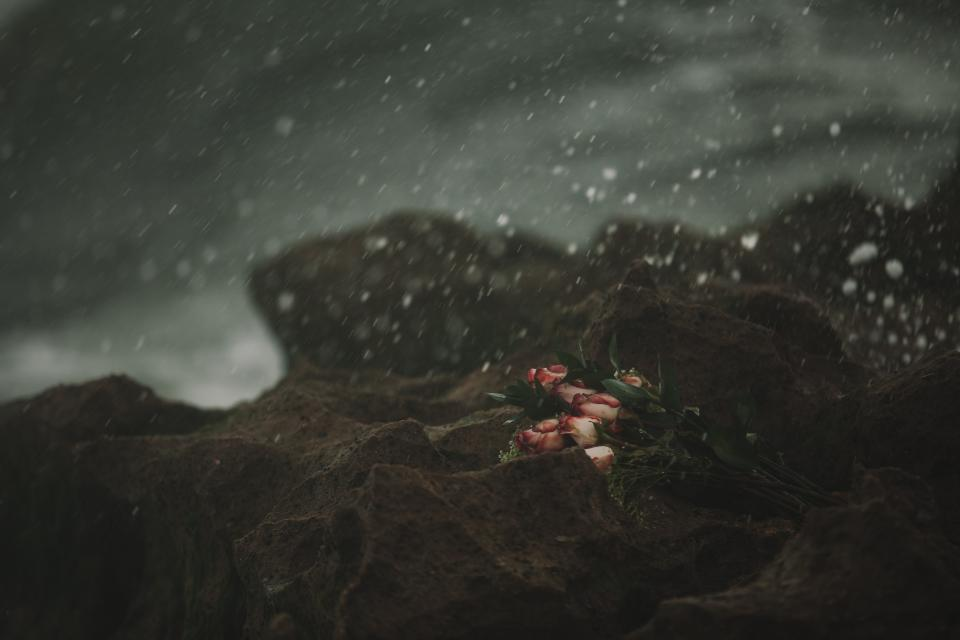roses, flowers, bouquet, rocks, outdoors, nature, snowing, snow, raining