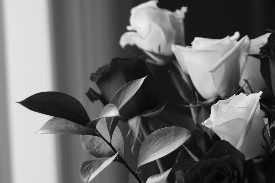 roses, bouquet, black and white