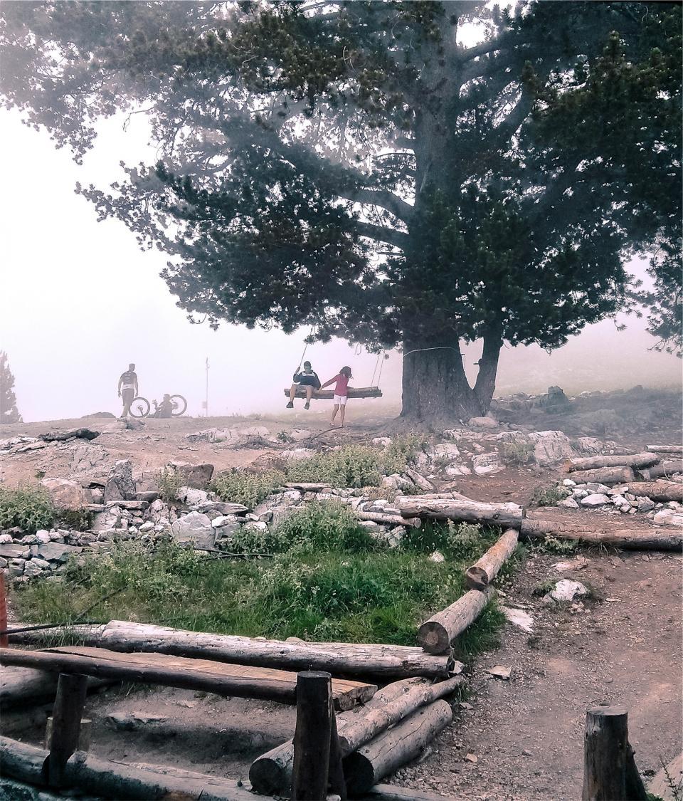 swing, kids, children, playing, wood, logs, rocks, tree, people, dirt