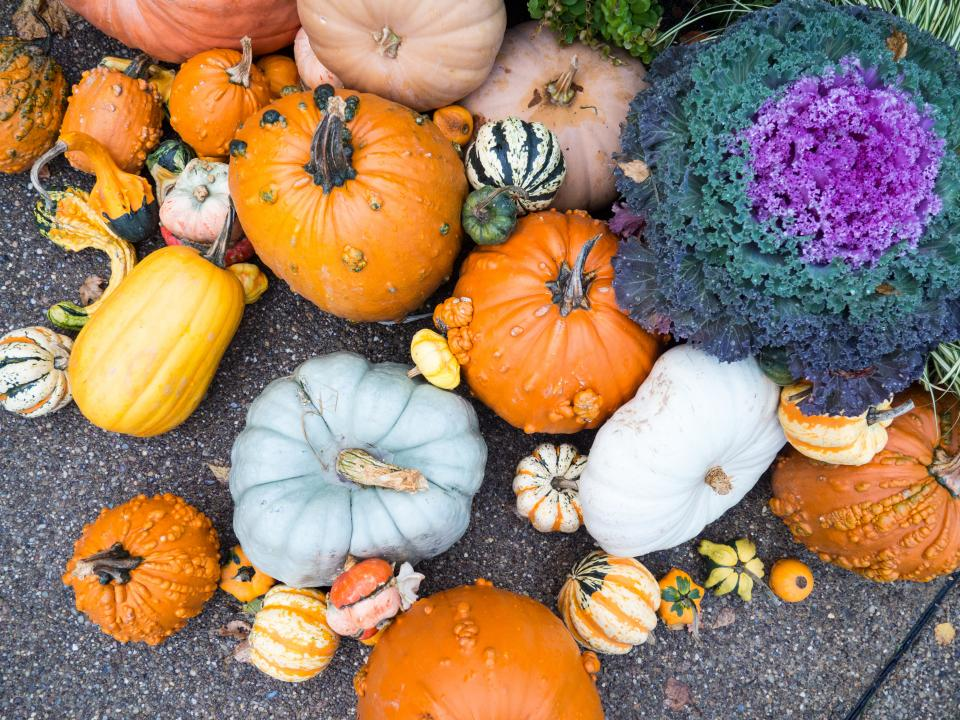 pumpkins, fall, autumn, ground, pavement, plants