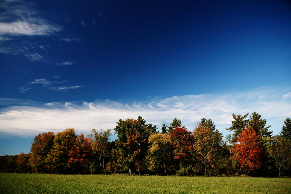 autumn, trees, colors, meadow, grass, fields, blue, sky, clouds, nature, outdoors