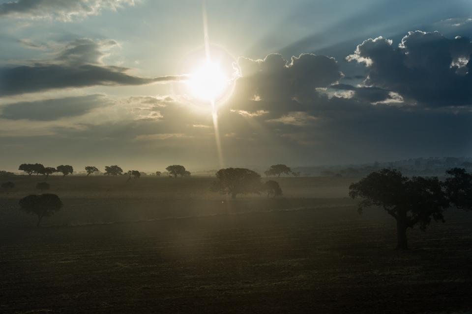 sunrise, morning, landscape, fields, grass, trees, sky, clouds, sunshine