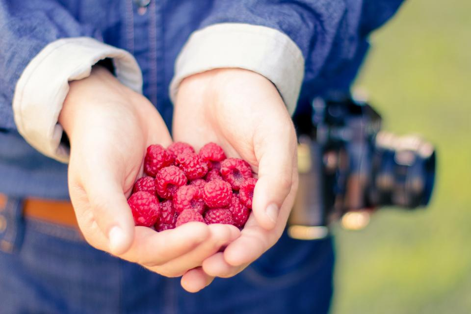 raspberries, berries, fruits, food, healthy, hands, palms