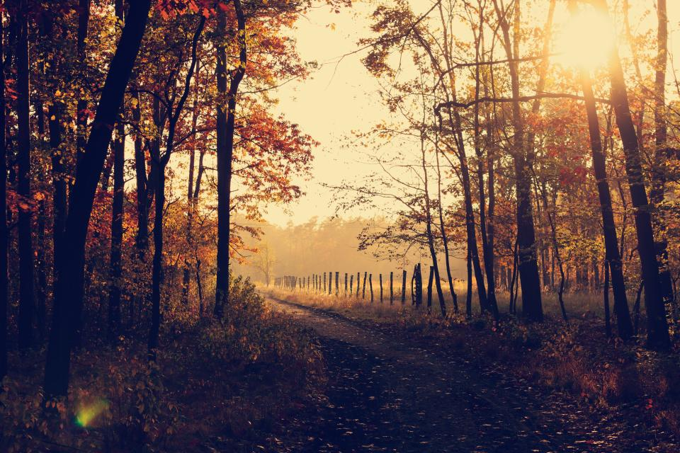 trees, forest, woods, nature, park, sunrise, fall, autumn, leaves, trail, path, rural, countryside